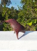 Abbildung: Freie Vogelform