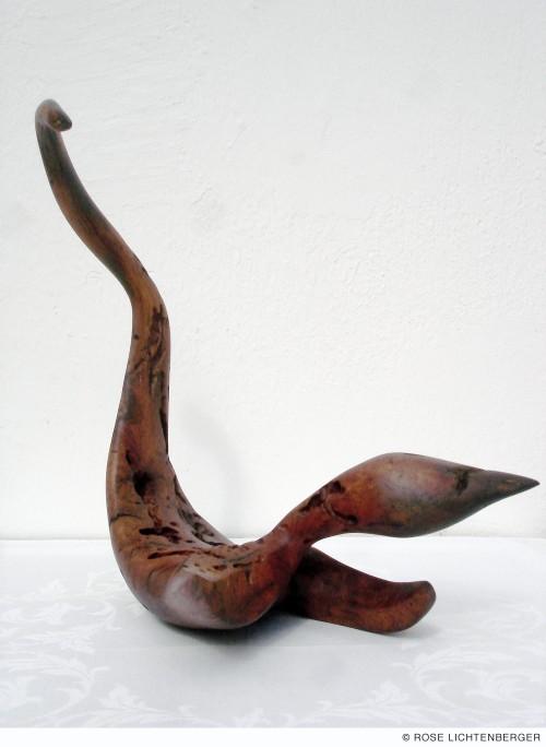 Abbildung: Flugechse