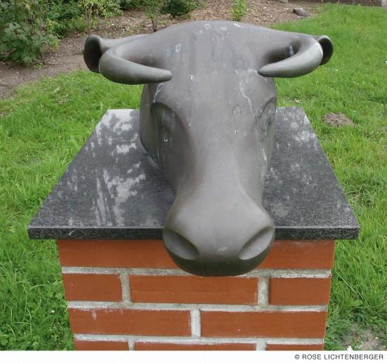 Abbildung: Neugierige Kuh